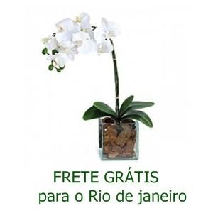 Orquídea Phalaenópsis Branca no Vidro