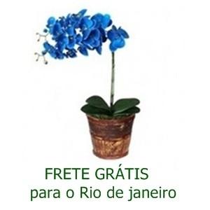 Orquidea Phalaenópsis Azul Cachepot de Madeira