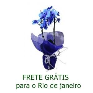 Orquídea Phalaenópsis Azul na Tela