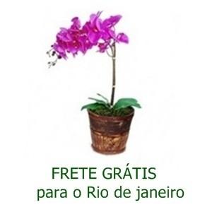 Orquidéa Lilás No Cachepot de Madeira