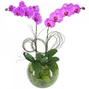Orquídea Phalaenópsis Lilás no Vidro