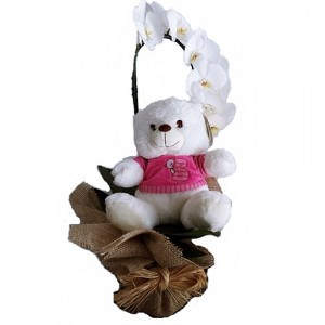 Orquidéa Branca com urso rosa menina