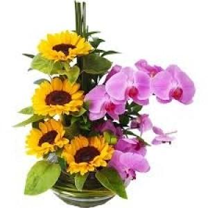 Arranjo de Girassol orquideas phalaenopsis