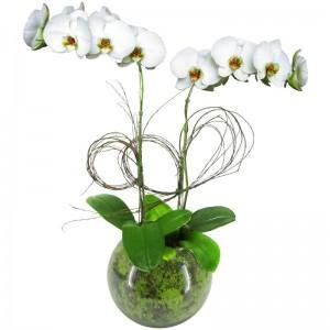 Orquídea Phalaenópsis Brancas no Vidro