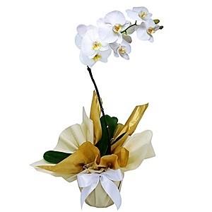 Orquidea White