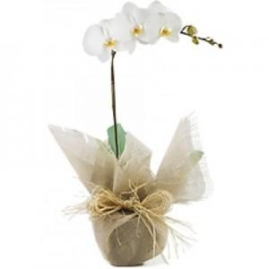 Orquídea em Tela
