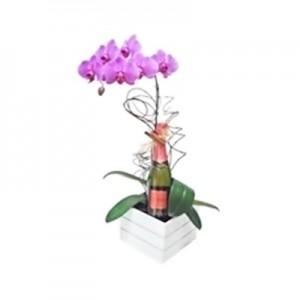 Orquídea com Chandon Baby