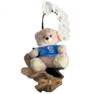 Orquidéa Branca com urso azul menino